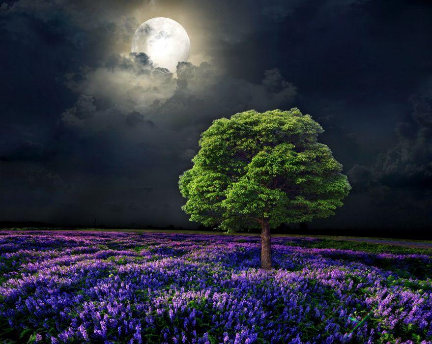 Scenery Fields Sky Trees Moon Night Nature wallpaper