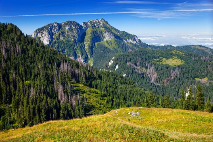 Scenery Mountains Forests Grass Nature wallpaper