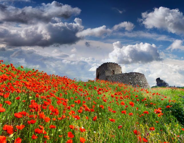 Sky Poppies Clouds Nature Flower wallpaper