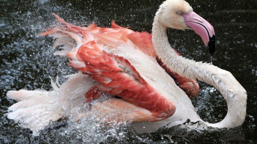 Birds Flamingo Spray Animals wallpaper