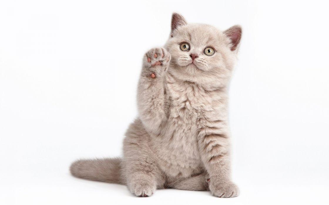 Cats Kitten wallpaper