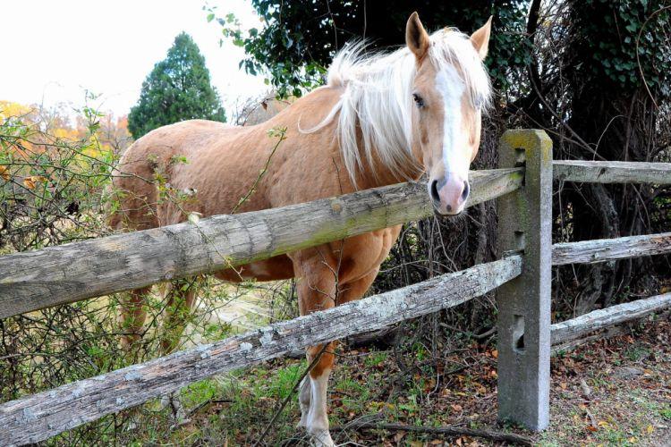 Horse f wallpaper