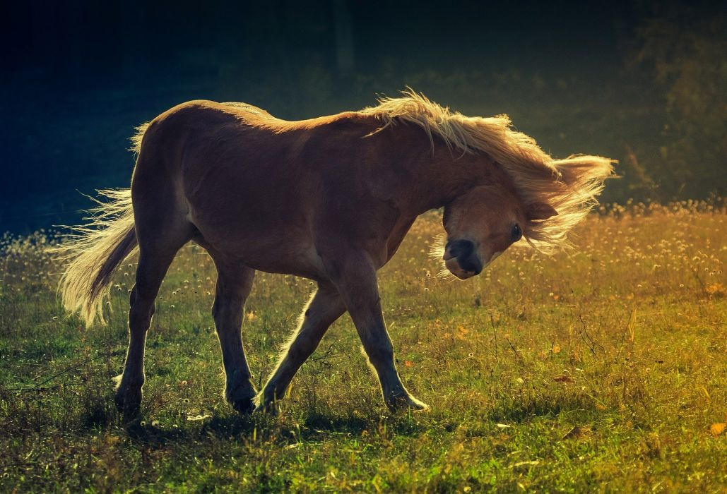 Horse  h wallpaper