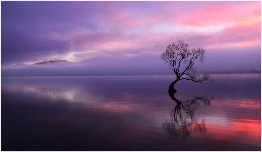 tree sunset lake evening bokeh mood wallpaper