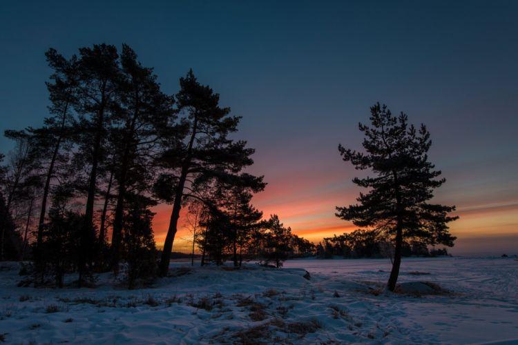 twilight snow winter trees sunset wallpaper