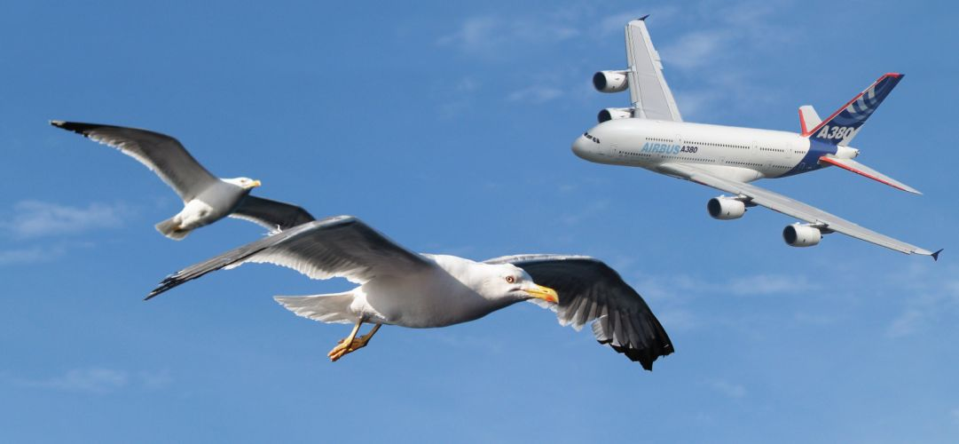 AIRBUS A380 airliner plane airplane transport (34) wallpaper