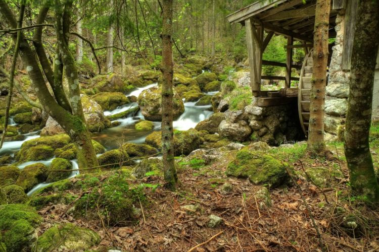 forest river water mill trees rocks nature wallpaper