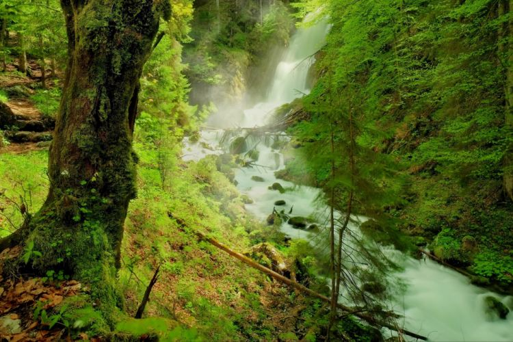 forest river waterfall trees rocks nature wallpaper