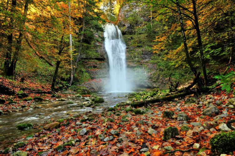 forest autumn trees river waterfall nature wallpaper