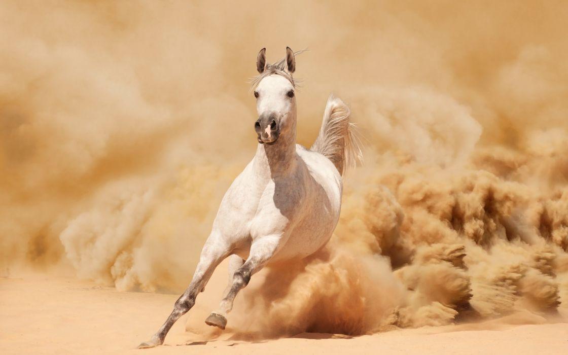 sand running horse dust wallpaper