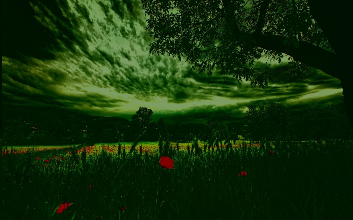 nature trees clouds sky grass meadow flowers poppies wallpaper