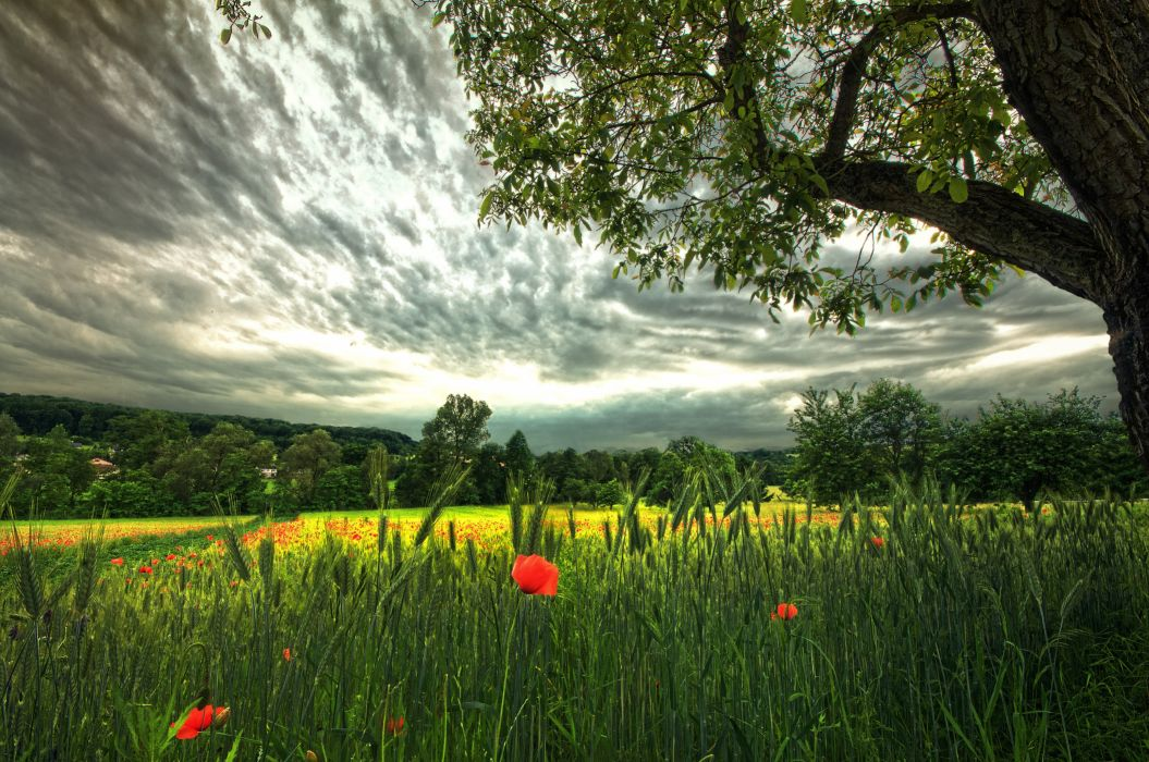 nature trees clouds sky grass meadow flowers    d wallpaper