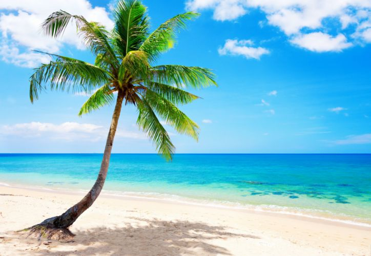 palm paradise emerald ocean tropical coast blue beach sea wallpaper