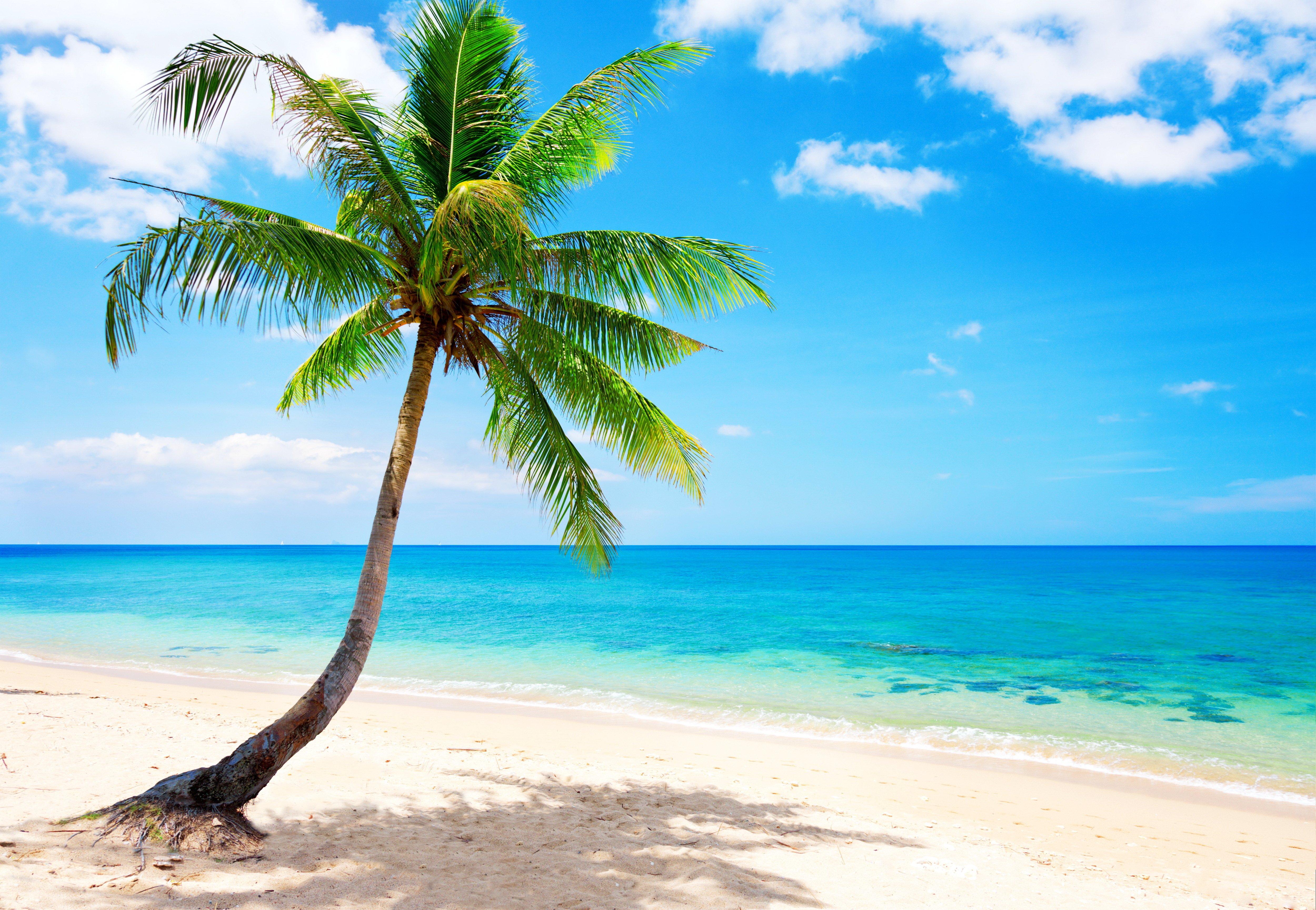 Palm paradise emerald ocean tropical coast blue beach sea wallpaper 5000x3456 360256 - Free palm tree screensavers ...