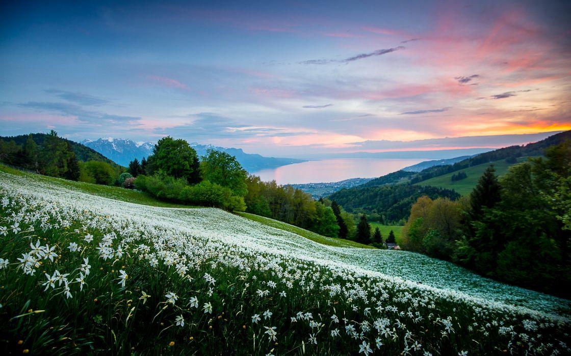 sunset mountains landscape flowers wallpaper