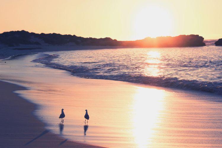 surf sea sand sunrise seagull ocean wallpaper