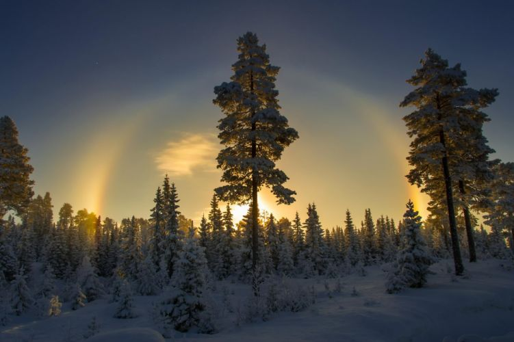 trees snow winter norway wallpaper