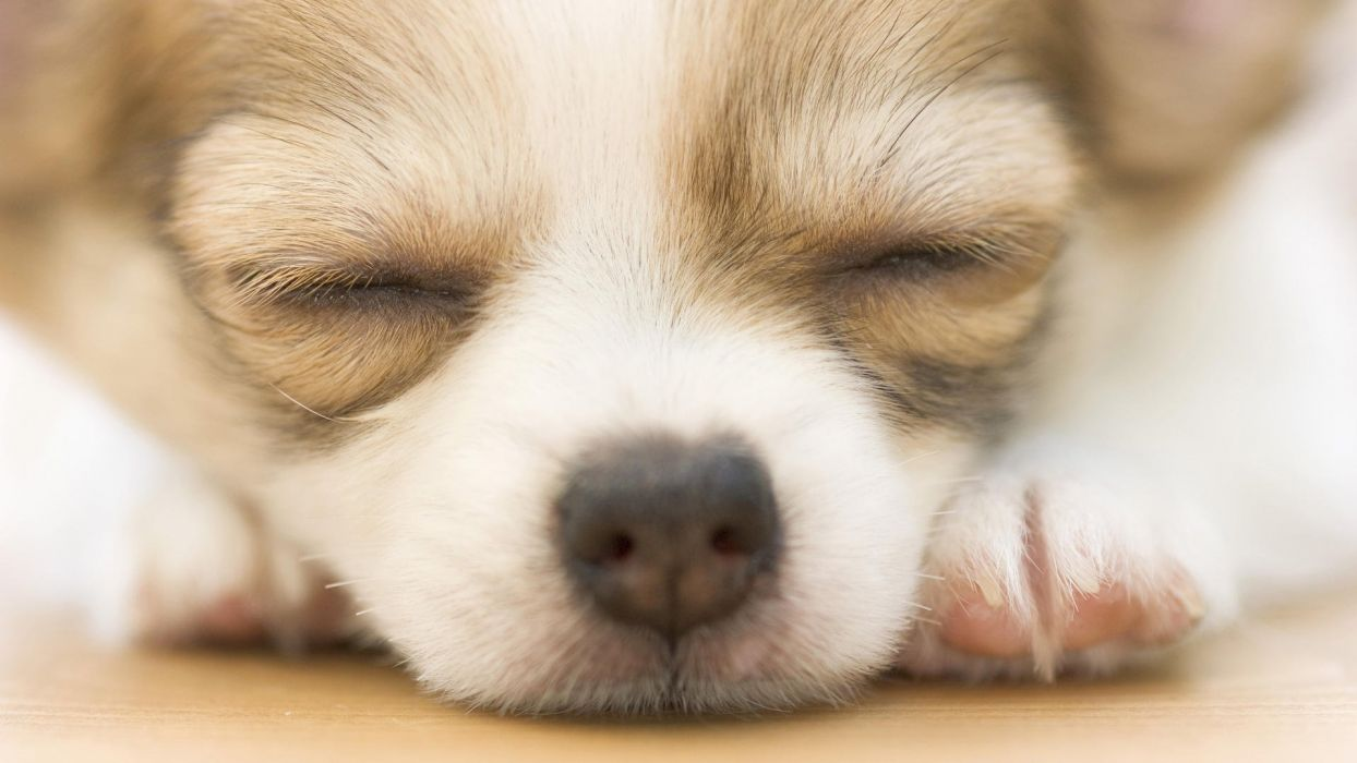 puppy baby      g wallpaper