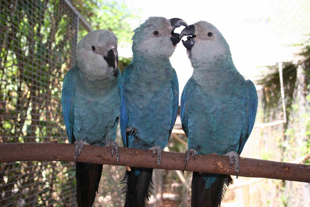 macaw parrot bird tropical (6) wallpaper