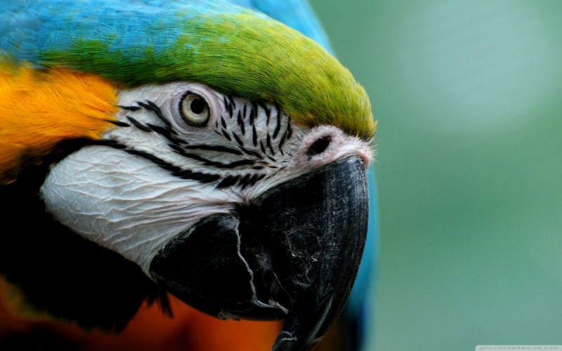 macaw parrot bird tropical (18) wallpaper