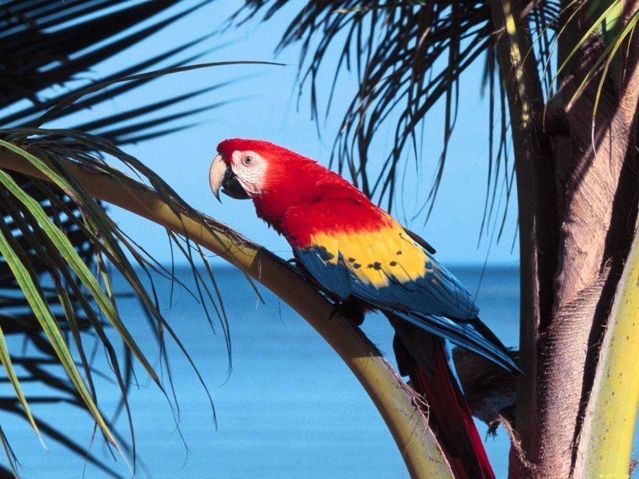 macaw parrot bird tropical (29) wallpaper