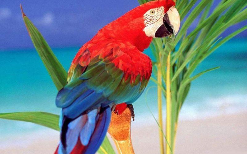 macaw parrot bird tropical (40) wallpaper