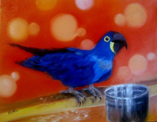macaw parrot bird tropical artwork art wallpaper