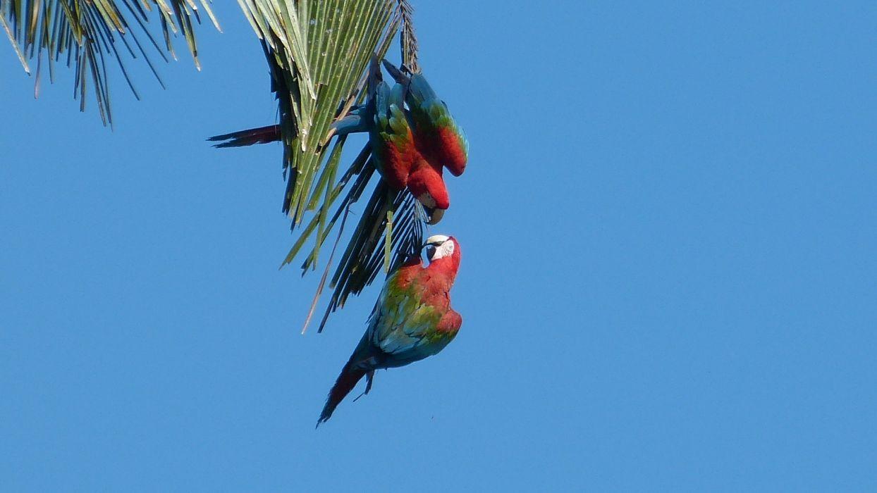 macaw parrot bird tropical (49)_JPG wallpaper