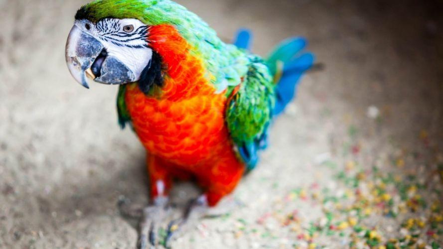 macaw parrot bird tropical (51) wallpaper
