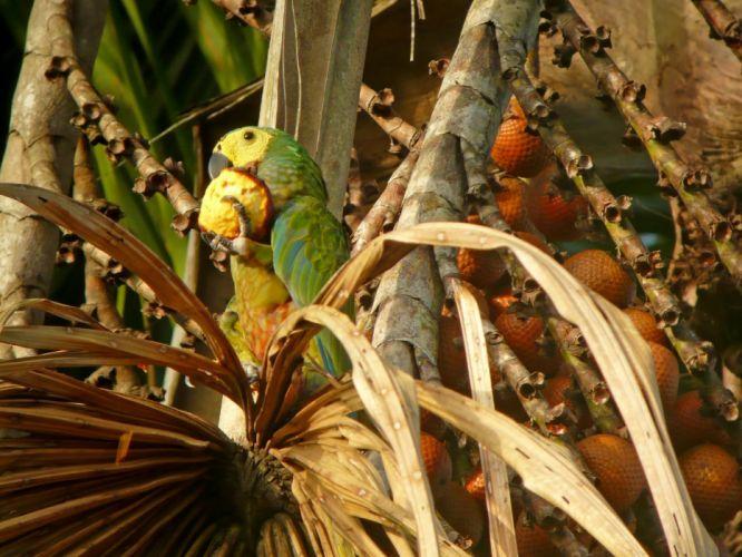 macaw parrot bird tropical (60) wallpaper