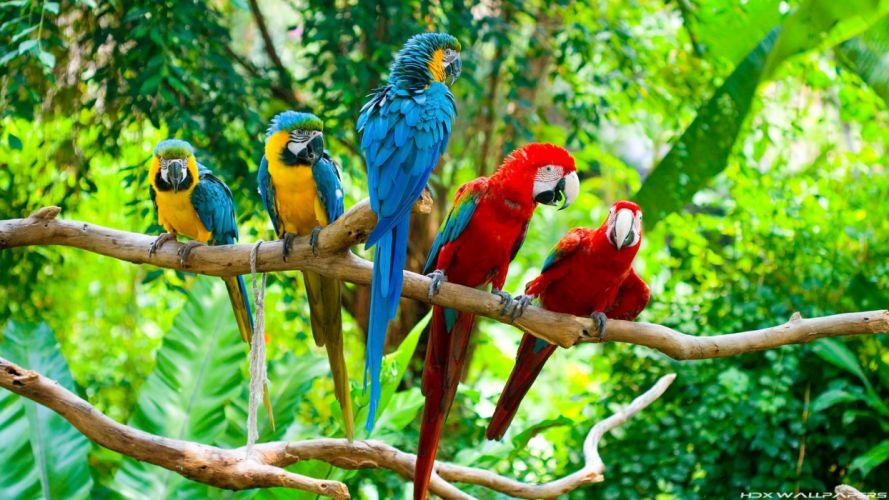 macaw parrot bird tropical (59) wallpaper