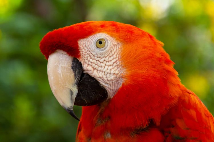 macaw parrot bird tropical (70) wallpaper