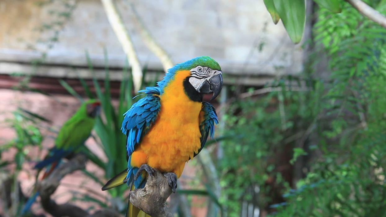 macaw parrot bird tropical (80) wallpaper