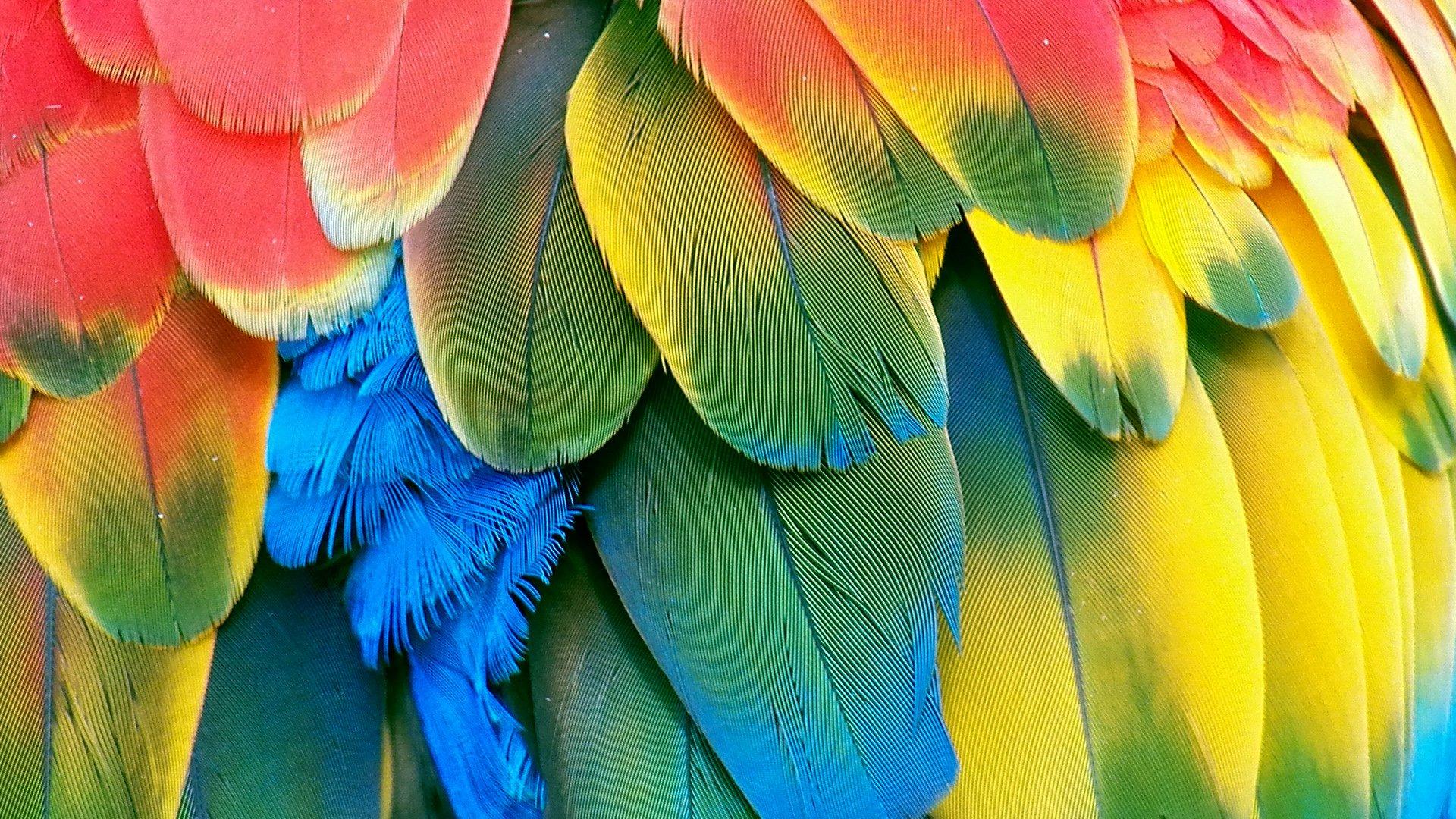Macaw parrot bird tropical (93) wallpaper | 1920x1080 ...