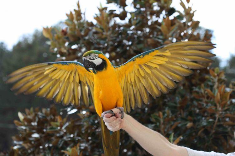 macaw parrot bird tropical (24) wallpaper