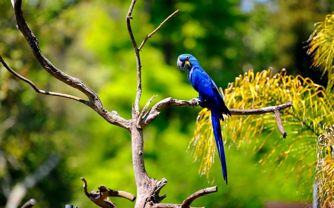 macaw parrot bird tropical (26) wallpaper