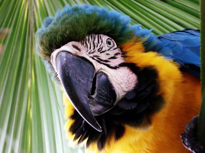 macaw parrot bird tropical (36) wallpaper