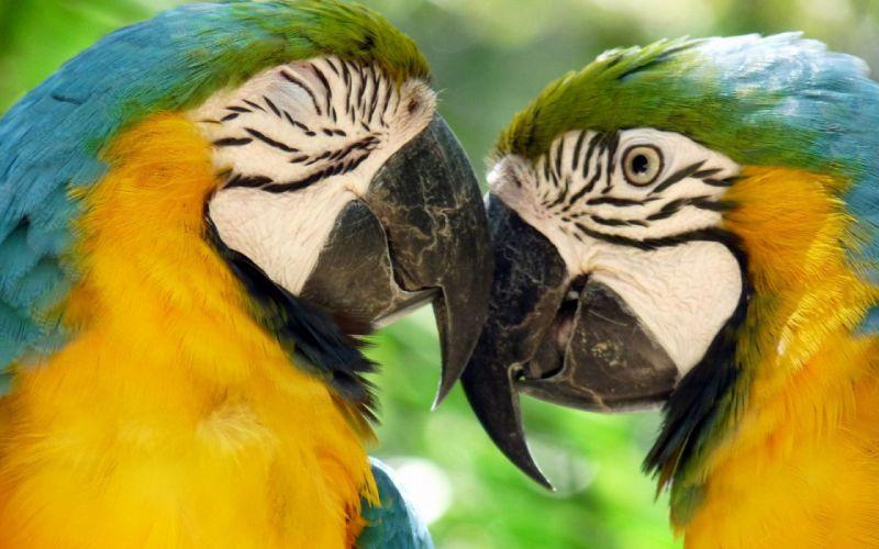 macaw parrot bird tropical (32) wallpaper