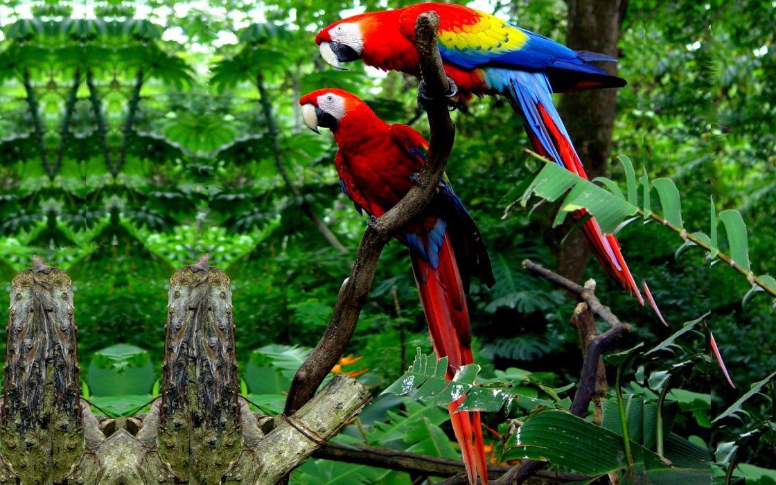 macaw parrot bird tropical (45) wallpaper