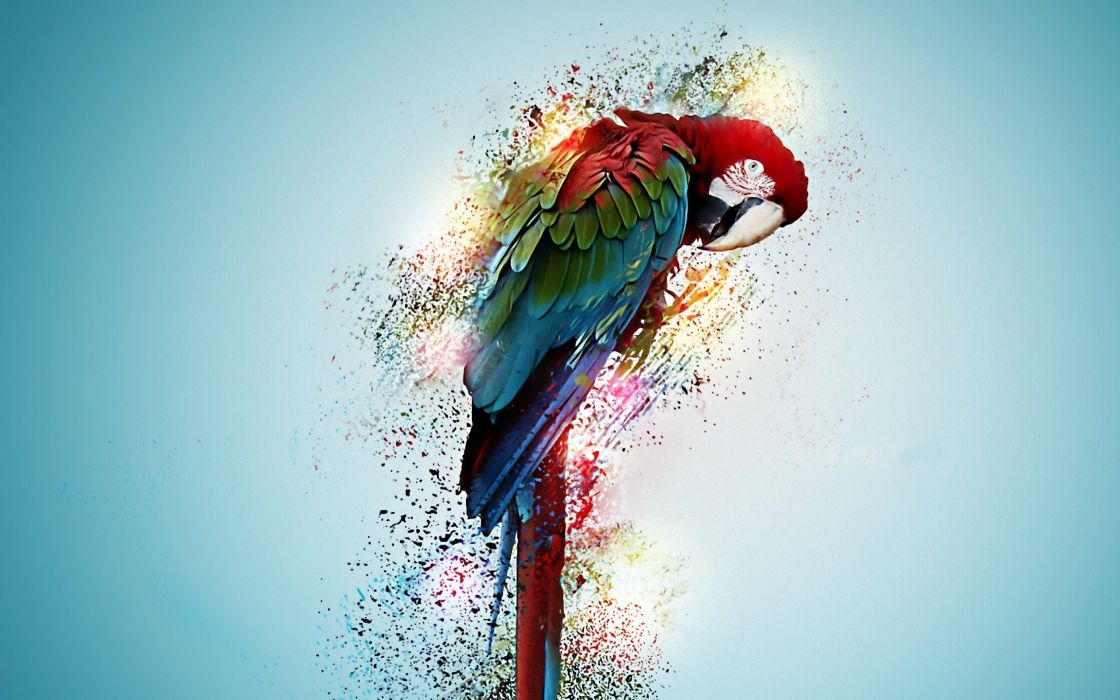 macaw parrot bird tropical psychedelic artwork art wallpaper