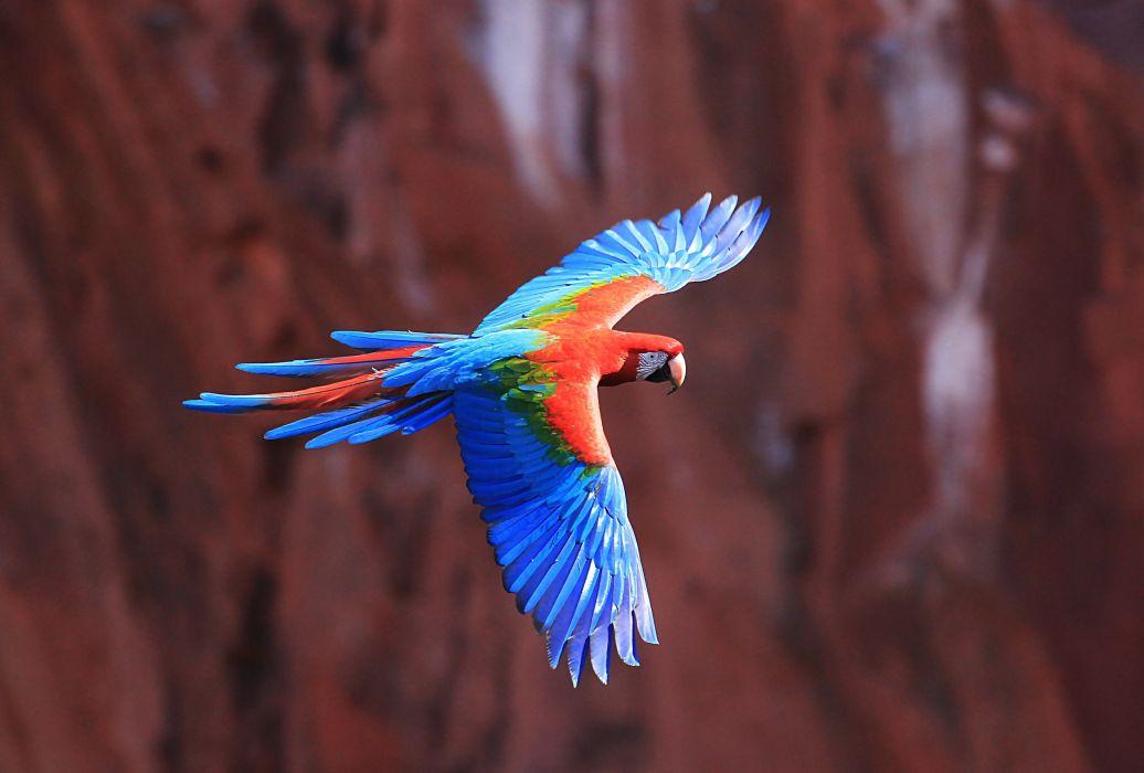 macaw parrot bird tropical (80)_JPG wallpaper