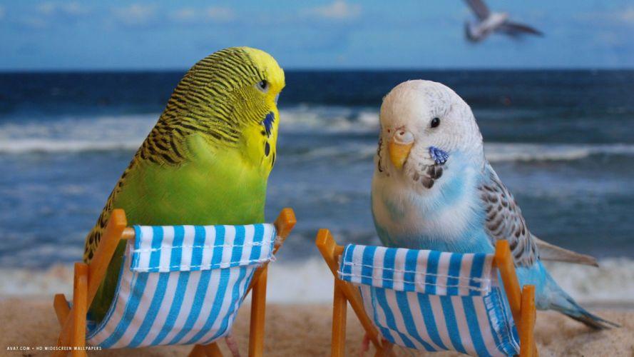 parakeet budgie parrot bird tropical (23) wallpaper