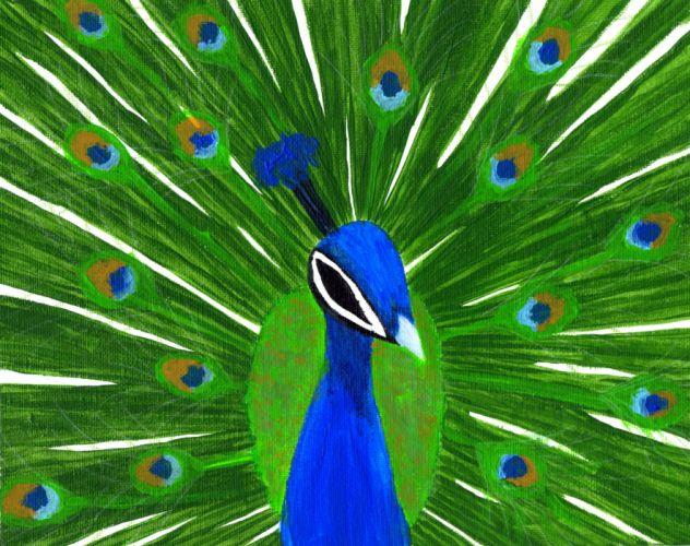 PEACOCK bird colorful (23) wallpaper