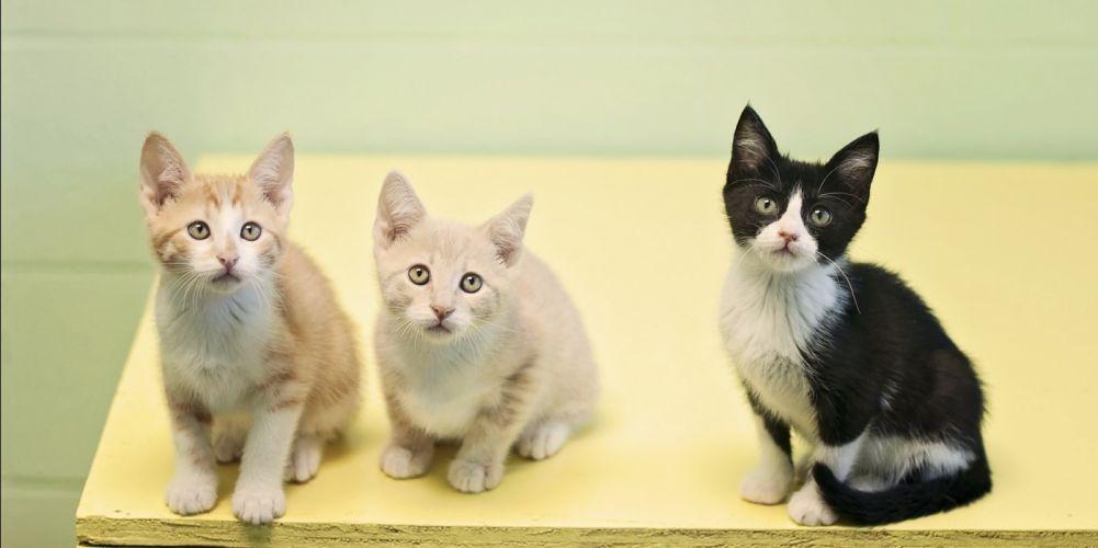 kittens cat cats kittens baby cute (18) wallpaper