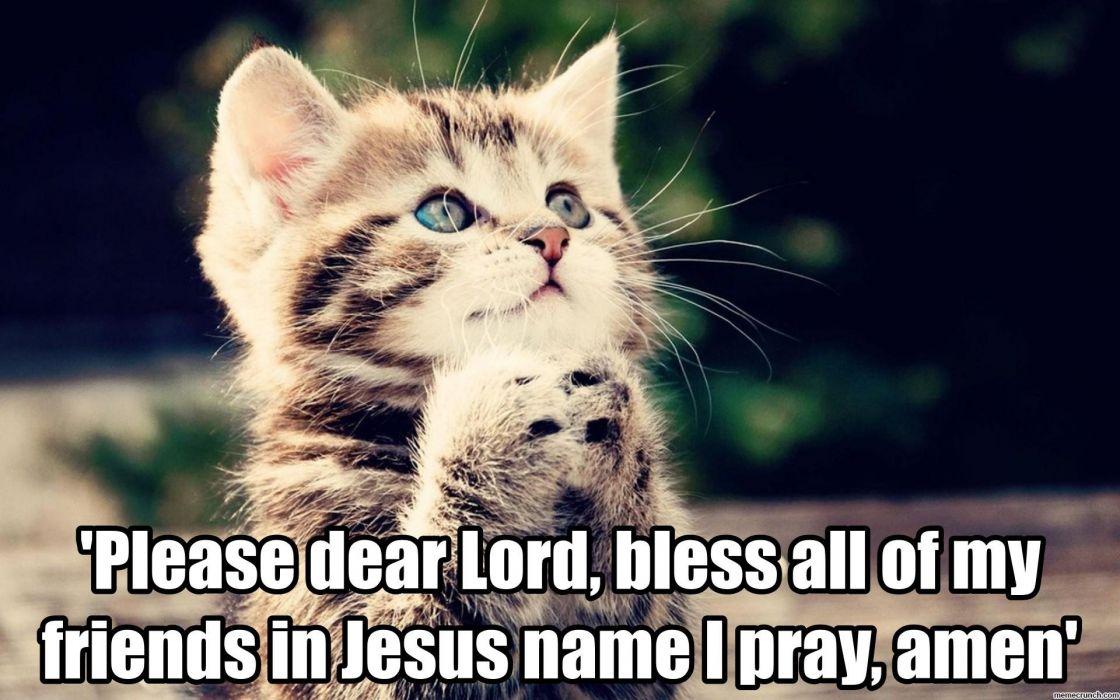 cat cats religion prayer cute kitten kittens wallpaper