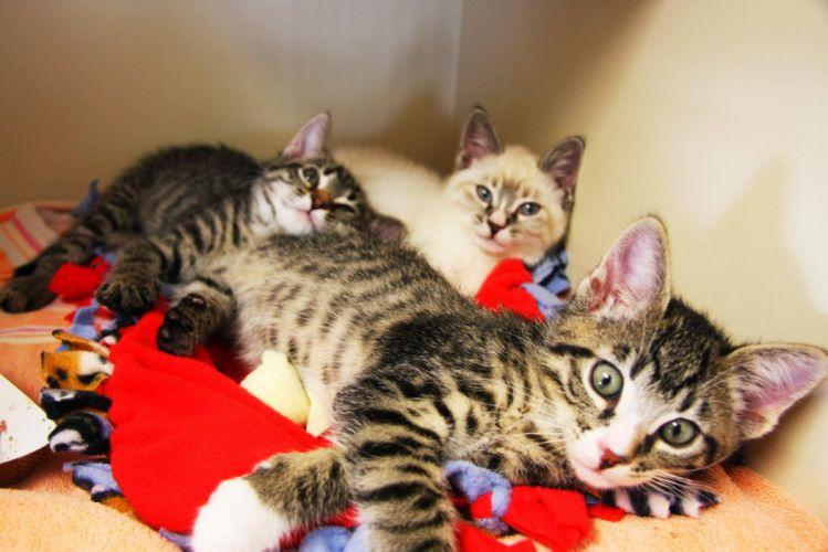 kittens cat cats kittens baby cute (27) wallpaper