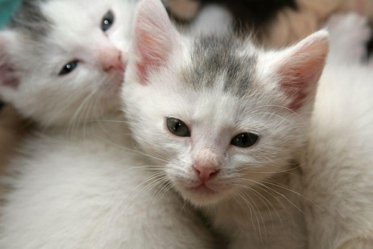 kittens cat cats kittens baby cute (31) wallpaper