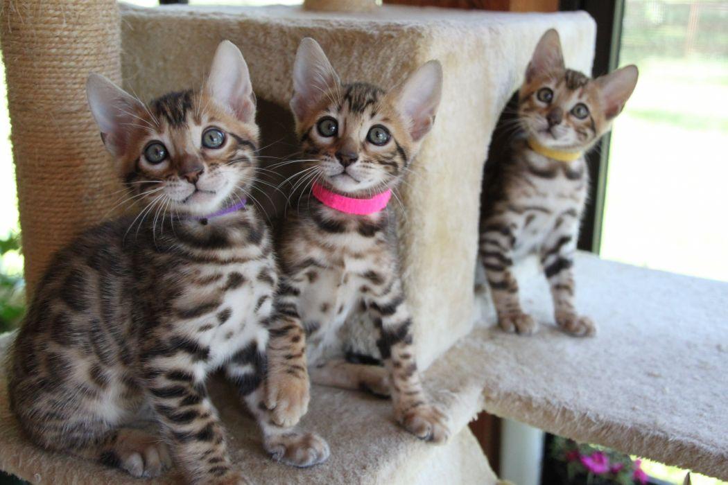 kittens cat cats kittens baby cute (32) wallpaper