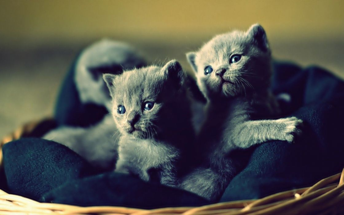 kittens cat cats kittens baby cute (36) wallpaper
