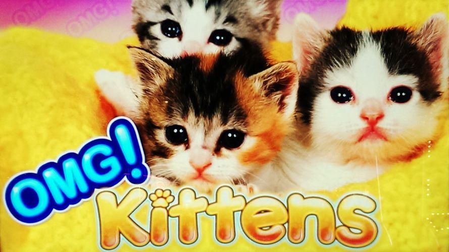 kittens cat cats kittens baby cute (45) wallpaper